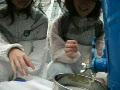 動画:横浜市新横浜駅近くのビルの屋上で採蜜09